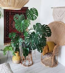 instagram house plant ideas pinterest plants and indoor
