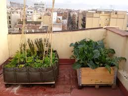 urban vegetable gardens growinpallet