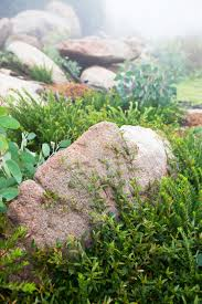 Bush Rock Garden Edging Don S Tips Rocks In The Garden Burke S Backyard