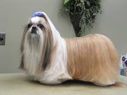 Dog Grooming Styles Haircuts Dogtails Grooming Parlour