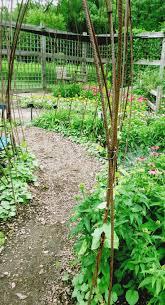 8 best trellis images on pinterest garden trellis garden ideas