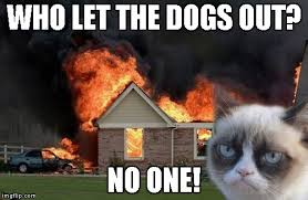 Who Let The Dogs Out Meme - burn kitty meme imgflip