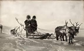 national geographic u0027s favorite reindeer pictures