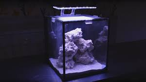 Reef Aquarium Lighting We Built A Reef Aquarium For Only 275 Here U0027s How We Did It