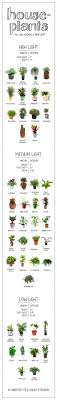 low light houseplants plants that don t require much light 97 best gardening indoor images on pinterest indoor house plants