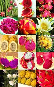 edible fruits fruit mix edible fruits hylocereus undatus