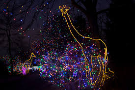 Zoo Lights by Denver Zoo To Host Zoo Lights Preview Nights November 25 U0026 26