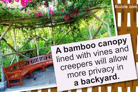 truly creative ways to increase privacy in your backyard