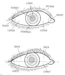 Chinese Face Mapping Healing Ways Iridology Charts Healthy Body U0026 Mind Pinterest