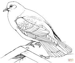 dove coloring page for kids download 8810