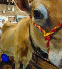 Siã Ge De Bain Bã Bã Pas Cher Reprimands Of Milkiowa State Dairy Science