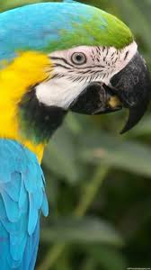 parrot color iphone 6 wallpapers hd and 1080p 6 plus wallpapers