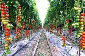 laying out a vegetable garden garden ideas