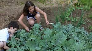 starting a farm in your own backyard entrepreneur ph