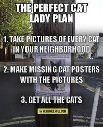Missing Cat Meme - 16 brilliant and hilarious missing cat posters missing cat poster