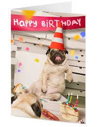 happy birthday u0027 pizza party pug u0026 friends wearing road cone