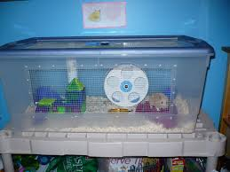 Hamster Cages Cheap Best Syrian Hamster Cage Yahoo Answers