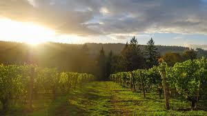 oregon wine region photo gallery willamette valley allison inn