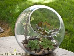 3pcs set round globe moss succulent terrarium bowl planter