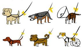 dog ribbon what to do if you see a yellow ribbon on a dog s leash care2 causes