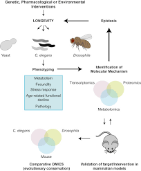 genetics and pharmacology of longevity the road to therapeutics