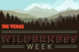 cool trees wilderness week cool trees tiny lizards big parks and more