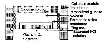 biosensor enzyme technology