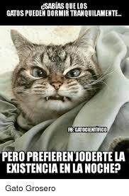 imagenes groseras de gatos 25 best memes about los gatos los gatos memes