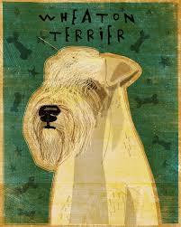 wheaten terrier art print 8
