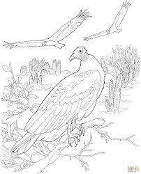 turkey vultures in a desert coloring page free printable