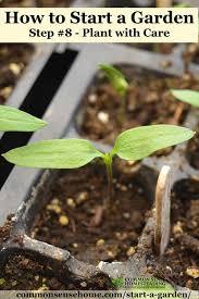 how to start a garden u2013 10 steps to gardening for beginners
