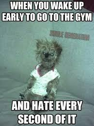 Preworkout Meme - amazing 21 pre workout meme wallpaper site wallpaper site