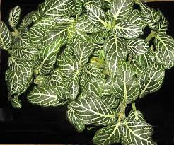 46 best non poisonous houseplants safe for and pets images