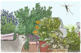 plants that keep mosquitoes away how to keep mosquitoes away our best repellent strategies