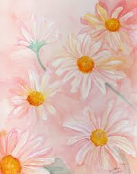 shasta daisies watercolors paintings original pale coral