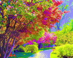 colorful trees in susanna katherine color