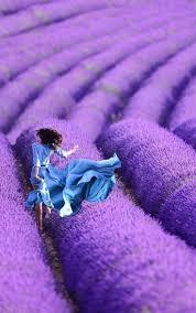 Purple Color 99 Best Purple And Blue Color Mix Images On Pinterest Colors
