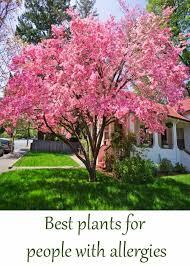 326 best shrubs trees images on gardening
