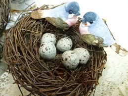 bird nest bird nest with birds and eggs decorative floral