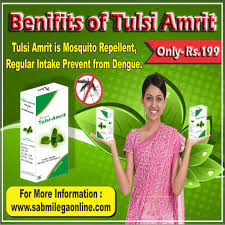 tulsi is mosquito repellent regular usse tulsi amrit prevent