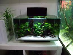 3 fluval edge shop displays aquascapes aquariums
