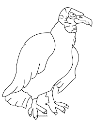 vulture coloring page getcoloringpages com