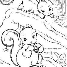 squirrel coloring kids squirrel coloring kids