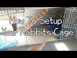 Rabbit Hutch Set Up How To Setup Your Rabbits Cage Youtube