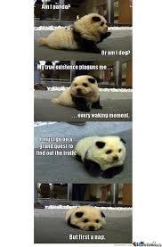 Cutest Memes - the cutest dog panda thing eva by hiroyuuy meme center