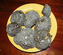 recette cuisine creole reunion friture de guêpes z endettes recette et photos la réunion