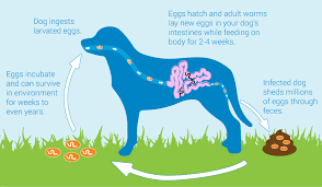 What Causes Dogs To Go Blind Dog Waste Causes Blindness In Humans