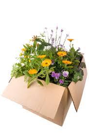 how to bring a dead plant back to life azaleas as houseplants u2013 can you grow azalea indoors