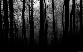 black and white images of trees 7 cool hd wallpaper