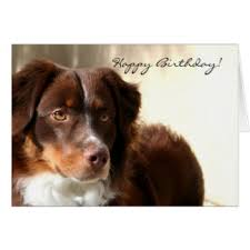 australian shepherd gifts happy birthday australian shepherd gifts t shirts art posters